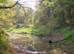 An oxbow wetland along the Vermilion River near the Bacon Woods Trail